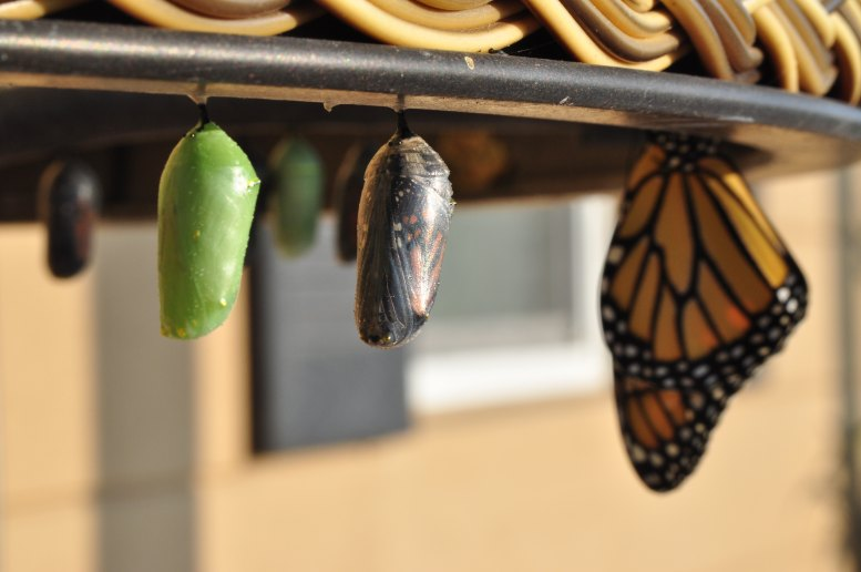 Evolution of self, butterfly, cocoon, larva